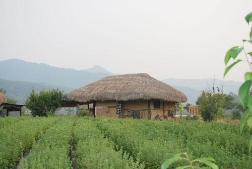 20081112_house
