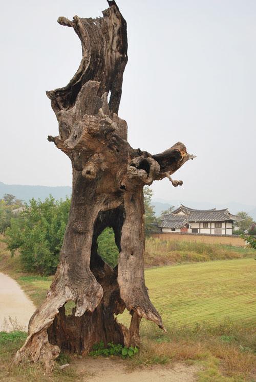20081112_trunk