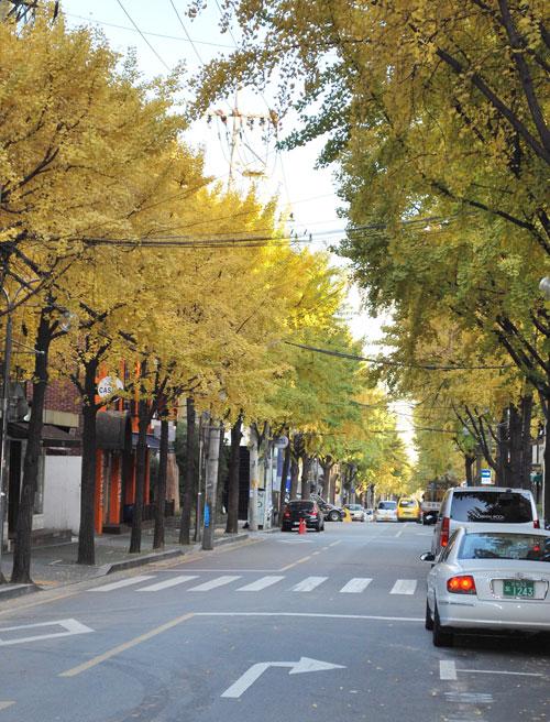 http://discoveringkorea.files.wordpress.com/2008/11/20081117_goldenginkgo.jpg?w=500&h=656