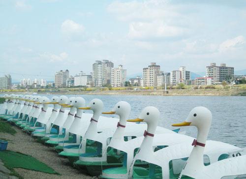 daegu_duckboats
