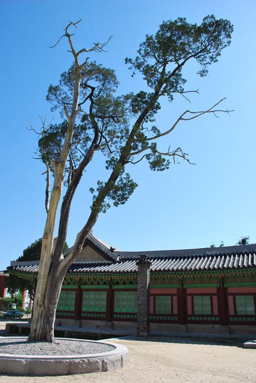 hwaseong_tree