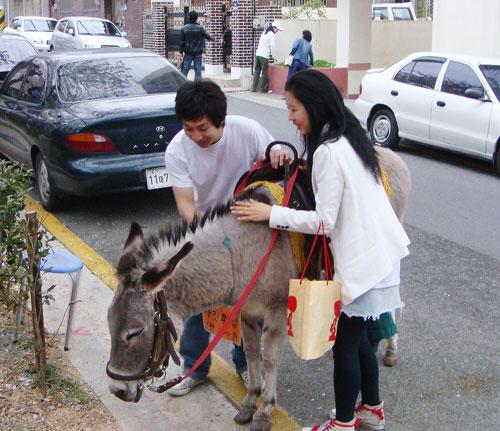 20090324_donkey