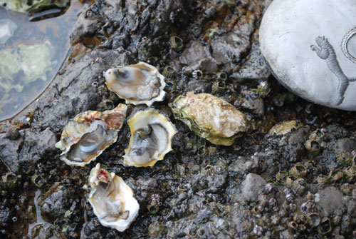 20090404_oysters