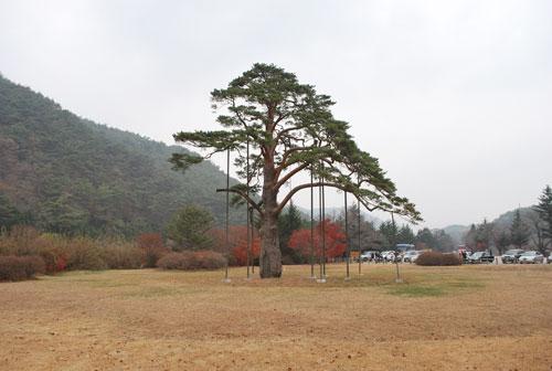 20090415_beopjusa_jeongipum