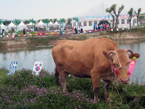 20090420_bull