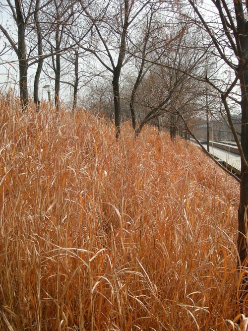 20090617_grass