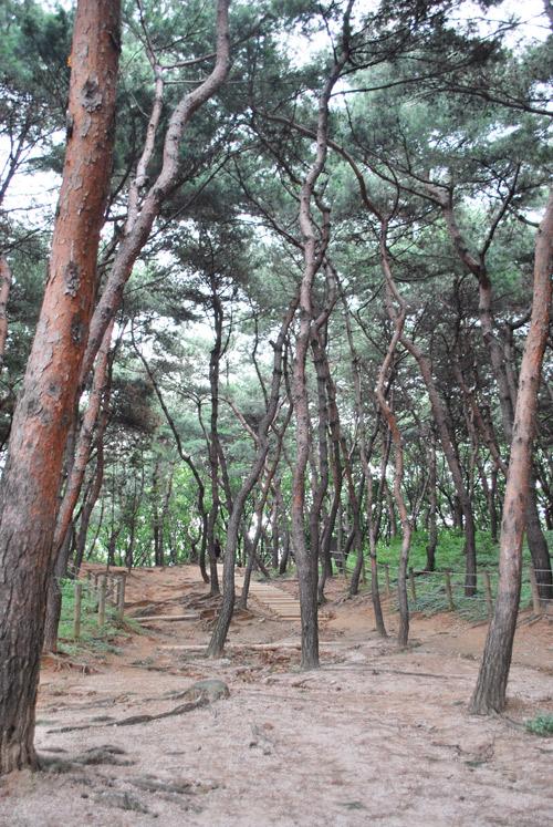 20090728_pine