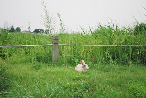 20090907_bunny